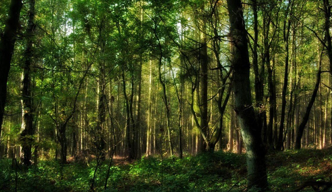 Investir-dans-les-forêts-un-placement-rentable-et-écolo.jpg