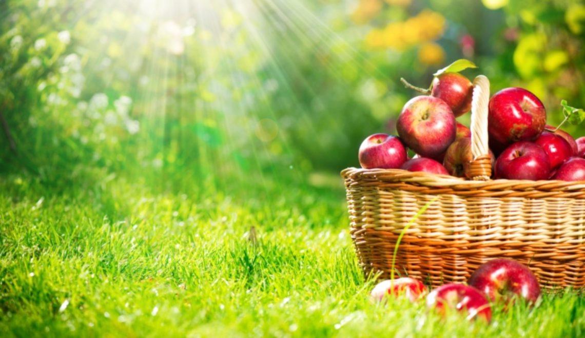 le-succes-de-l-agriculture-biologique
